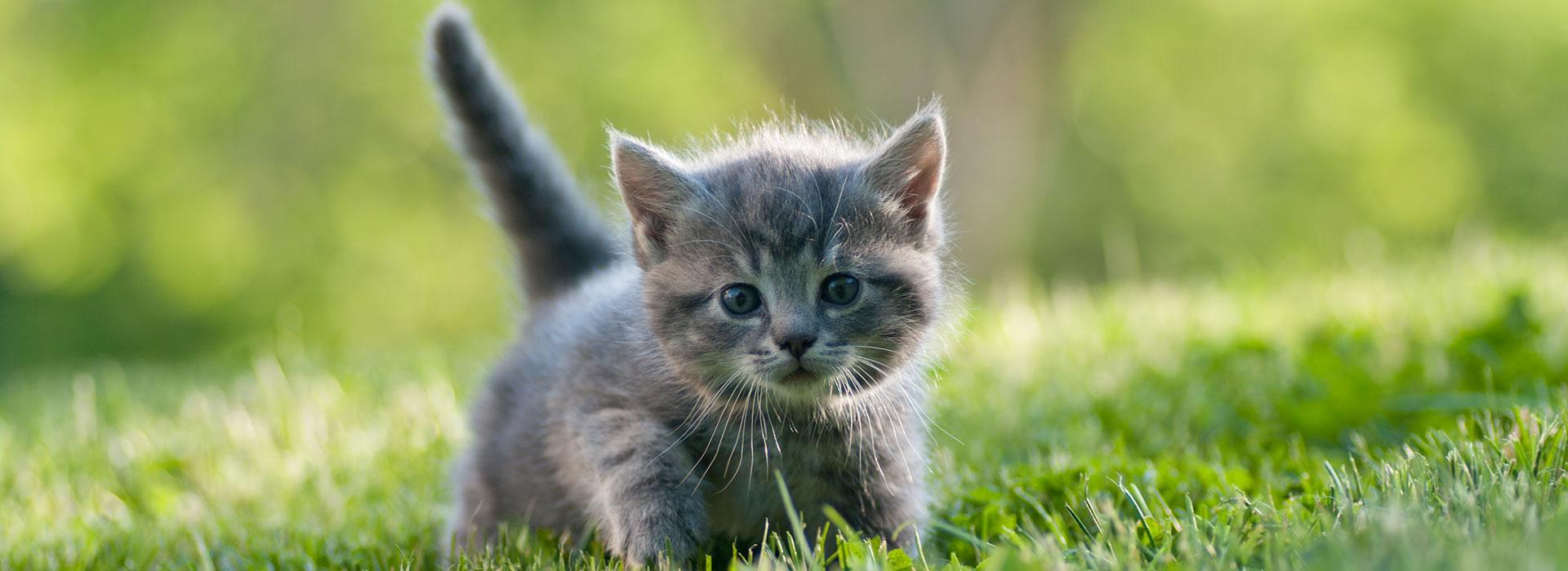 cat straining to urinate or defecate